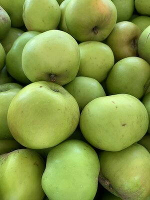Bramley Apple small