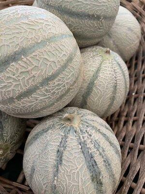Melon small