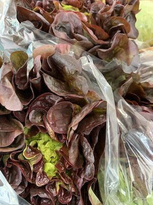 OakLeaf Lettuce small