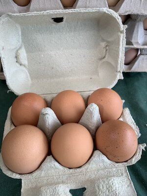XL Eggs small