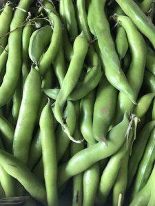 Broad Beans1